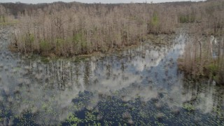 AX0035_047 - 5K stock footage aerial video of flying around trees in a swamp, Orlando, Florida