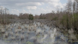 AX0035_048 - 5K stock footage aerial video of flying around trees in a swamp, Orlando, Florida