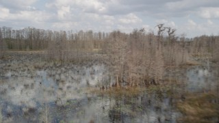 AX0035_049 - 5K stock footage aerial video of flying around trees in a swamp, Orlando, Florida