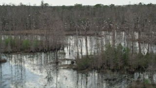 AX0035_053 - 5K stock footage aerial video of birds taking flight over swamps, Orlando, Florida