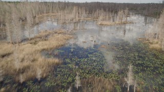 AX0035_062 - 5K stock footage aerial video fly over trees revealing swamp, Orlando, Florida