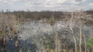 AX0035_063 - 5K stock footage aerial video fly low over swamp and ascend over trees, Orlando, Florida