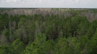 AX0035_065 - 5K stock footage aerial video fly over green forest and orbit a cluster of bare trees, Orlando, Florida