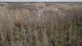 AX0035_066 - 5K stock footage aerial video fly over bare trees revealing swamps, Orlando, Florida