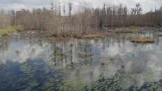 AX0035_068 - 5K stock footage aerial video fly low over swamp through bare trees, Orlando, Florida