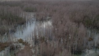 AX0035_073 - 5K stock footage aerial video fly over swamp with thick cluster of bare trees, Orlando, Florida