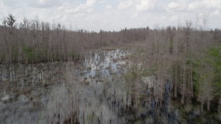 AX0035_078 - 5K stock footage aerial video fly low over swamps and bare trees, Orlando, Florida