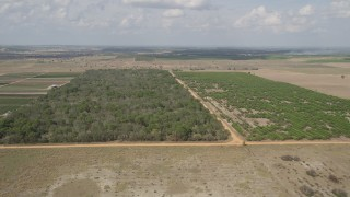 AX0035_090 - 5K stock footage aerial video of approaching farmland and flying over an orchard in Clermont, Florida