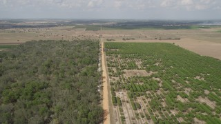 AX0035_091 - 5K stock footage aerial video of flying over an orchard toward farmland, Clermont, Florida