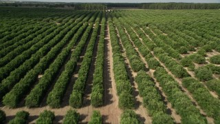 AX0035_092 - 5K stock footage aerial video of flying over rows of trees at an orchard in Clermont, Florida
