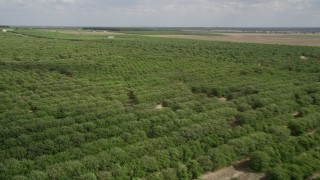AX0035_093 - 5K stock footage aerial video of panning across rows of trees, fly over an orchard, Clermont, Florida