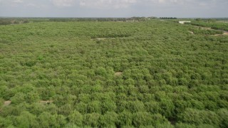 AX0035_094 - 5K stock footage aerial video of flying over rows of trees in an orchard, Clermont, Florida