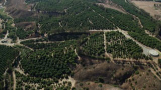 AX0159_164 - 8K stock footage aerial video flying over Orange Grove orchards, Irvine, California