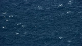 AX0159_238 - 8K stock footage aerial video orbiting a breaching dolphin pod,  Southern California