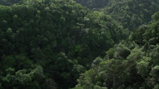 AX101_055 - Aerial stock footage of 5k Aerial Video Flying through the lush jungle and mountains, Karst Forest, Puerto Rico