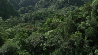 AX101_056 - 5K stock footage aerial video Flying through dense jungle, Karst Forest, Puerto Rico