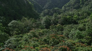 AX101_057 - Aerial stock footage of 5k Aerial Video Flying over dense jungle, Karst Forest, Puerto Rico