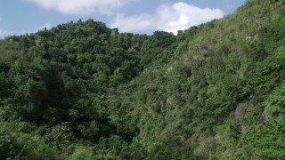 AX101_058 - Aerial stock footage of 5k Aerial Video Flying through lush dense trees, Karst Forest, Puerto Rico