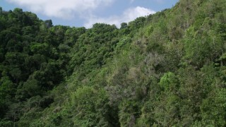 AX101_059 - Aerial stock footage of 5k Aerial Video of Lush dense trees, Karst Forest, Puerto Rico