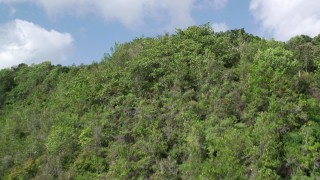AX101_060 - Aerial stock footage of 5k Aerial Video Flying over lush green trees, Karst Forest, Puerto Rico