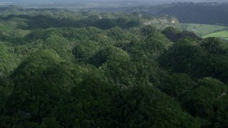 AX101_074 - 5k stock footage aerial video Panning the tops of lush green trees of the jungle, Karst Forest, Puerto Rico