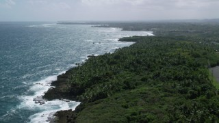 AX101_211 - 5k stock footage aerial video of a Palm tree covered coast and blue water, Vega Alta, Puerto Rico