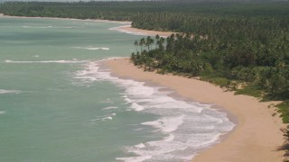 AX102_023 - 5k stock footage aerial video of A couple on a palm tree lined beach and turquoise waters, Loiza, Puerto Rico