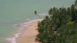 AX102_026 - 5k stock footage aerial video of Palm trees along a beach looking at turquoise waters, Loiza, Puerto Rico