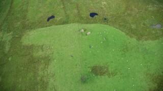 AX109_002 - 6K stock footage aerial video of bird's eye a grazing sheep and grassland, Cumbernauld, Scotland