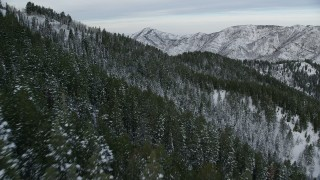 AX124_158 - 6K stock footage aerial video fly over snowy forest on mountain slopes at sunrise in the Wasatch Range, Utah