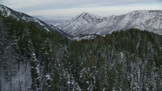AX124_159 - 6K stock footage aerial video of low flying over evergreen forest in the Wasatch Range at sunrise, Utah