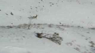 AX125_046 - 6K stock footage aerial video of tracking mule deer racing across snow on Antelope Island, Utah