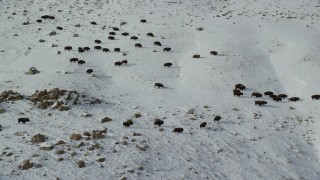 AX125_058 - 6K stock footage aerial video of tracking a herd of bison on snowy Antelope Island, Utah