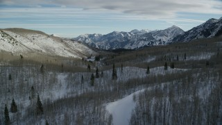 AX126_289 - 6K stock footage aerial video fly over leafless trees in a winter forest in the mountains, Wasatch Range, Utah