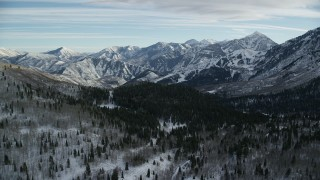 AX126_292 - 6K stock footage aerial video approach evergreens and distant snow mountains while flying over leafless trees in winter, Utah