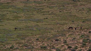 AX135_096 - 6K stock footage aerial video of orbiting horses grazing in Monument Valley, Utah, Arizona