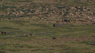 AX135_097 - 6K stock footage aerial video of circling grazing horses in a desert valley, Monument Valley, Utah, Arizona