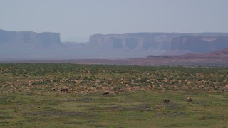 AX135_098 - 6K stock footage aerial video of orbiting grazing horses, giant buttes in background, Monument Valley, Utah, Arizona