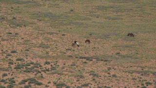 AX135_100 - 6K stock footage aerial video of grazing horses in a desert valley, Monument Valley, Utah, Arizona