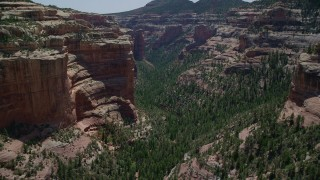 AX136_143 - 6K stock footage aerial video of flying over trees at the bottom of Arch Canyon, Utah