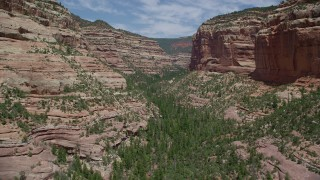 AX136_161 - 6K stock footage aerial video of flying over trees and vegetation at the bottom of Arch Canyon, Utah
