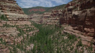 AX136_163 - 6K stock footage aerial video of flying low through the canyon with desert trees and plants, Arch Canyon, Utah