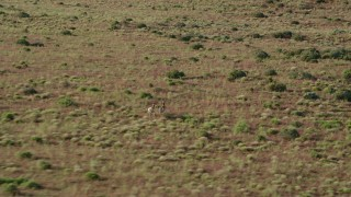 AX138_217 - 6K stock footage aerial video of tracking pronghorn running through desert near Moab, Utah