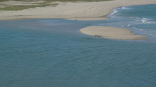AX144_035 - 6K stock footage aerial video flying away from seals on sand bar, low tide, Cape Cod, Eastham, Massachusetts