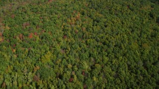 AX147_228 - 6k stock footage aerial video of a bird's eye view of a colorful, dense forest in autumn, Kittery, Maine