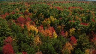 AX147_281 - 6k stock footage aerial video flying over a colorful forest in autumn, pan left, Biddeford, Maine