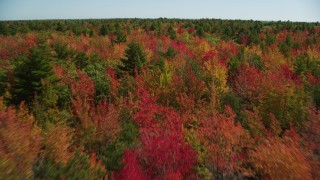 AX147_285 - 6k stock footage aerial video flying over a colorful forest in autumn, Biddeford, Maine
