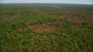 AX147_418 - 6k stock footage aerial video flying over dense, colorful forest, autumn, Woolwich, Maine
