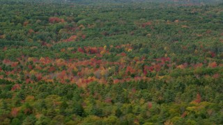 AX147_420 - 6k stock footage aerial video flying by dense, colorful forest in autumn, Woolwich, Maine