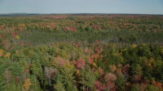AX148_039 - 6k stock footage aerial video flying over a colorful evergreen forest, autumn, Cushing, Maine